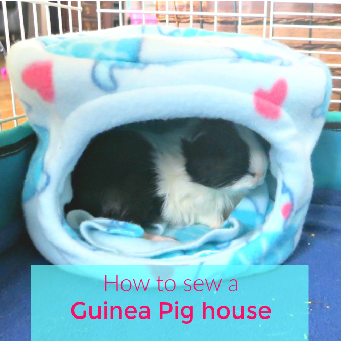 How To Sew A Guinea Pig House Picture Healer Feng Shui