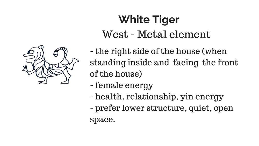 white tiger.jpg