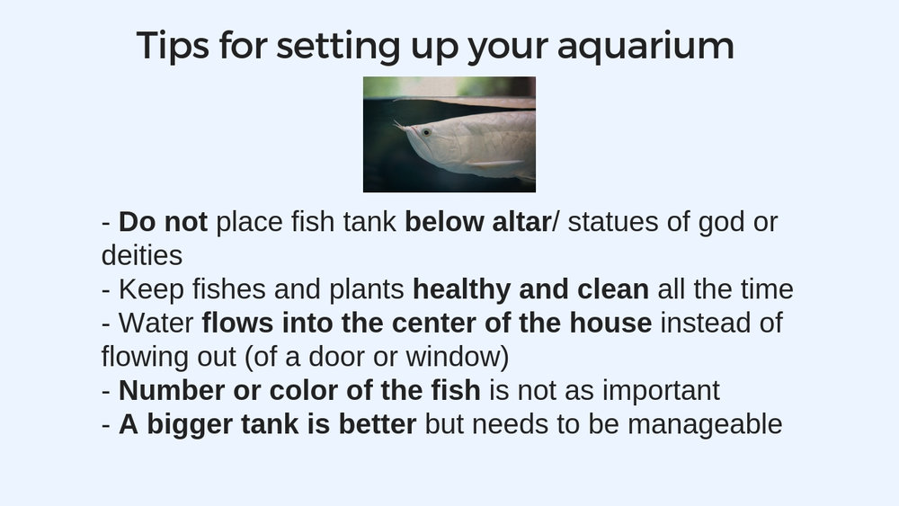 Fish tank 7.jpg
