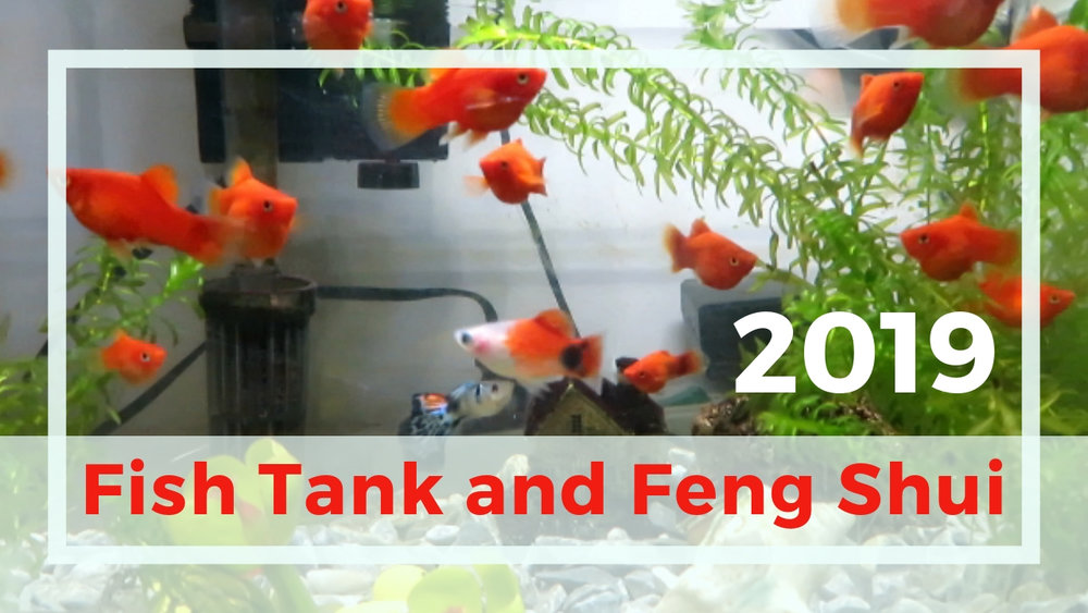 fish tank aquarium and feng shui 2019 1.jpg