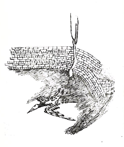 """The final image in  He Who Comes and Does Not Come  (1966), p. 77. A dead bird lies on its back at the foot of a tree growing to the side of a wall. It follows the poem, """"Night Everywhere"""" (الليل في كل مكان)"""