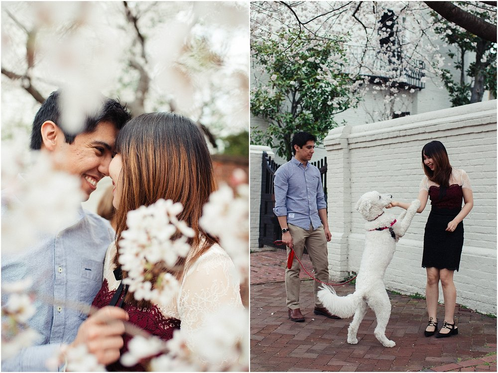 Engagement session with cherry blossoms by Alexandria Waterfront, Founders Park, Torpedo Factory Art Center