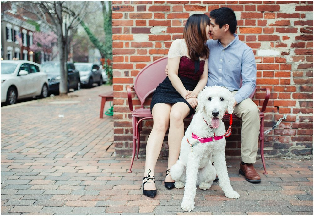 Old Town Alexandria Engagement Session with Goldendoodle Puppy at Cobblestone Street