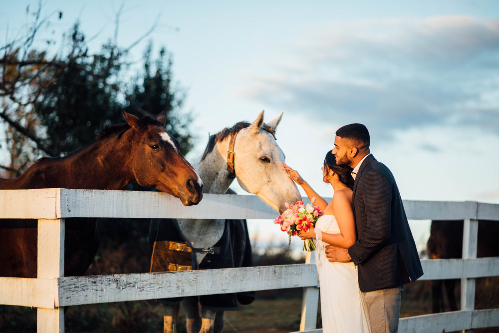 Briar Patch Bed and Breakfast Farm Horses Wedding