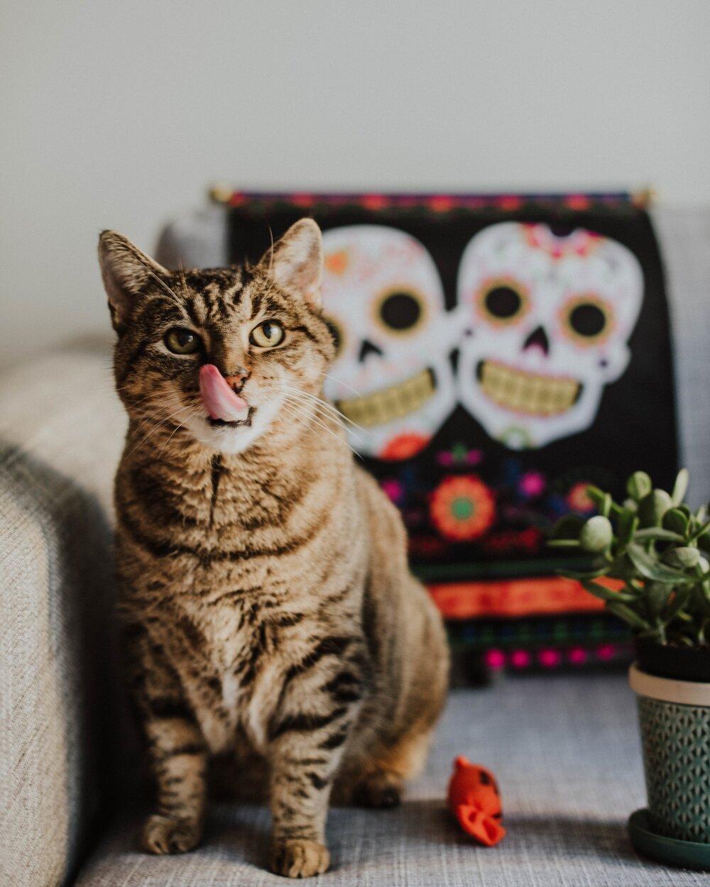 Gioia-Lucia-Halloween-2018--11.jpg
