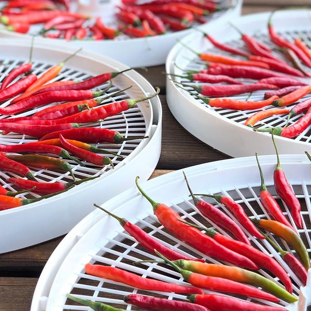 What do you do when your friend, a mega-talented Taiwanese chef, asks to collaborate on a chili spice blend?  LIGHT IT UP! 🔥🌶🔥🌶 We normally air dry our chilies, but we needed these for @choochoocachew 's demo at @rochfarmmkt this Saturday (You will not want to miss this!) so we are using a dehydrator to speed up the process.  Be sure to stop by the chef demo tent and try Tiffany's dumplings 🥟 with chili 🌶 sauce. Then visit us at market to pick up a jar and a recipe to make up this spicy sauce at home.  Considering that just dehydrating these beauties is making our eyes water, we are gearing up for HEAT. . . . . #f52monochrome #somelikeithot #taiwanesefood #thaichili #chili #foodie #dehydrated #lightitup #fire #plantbased #spicy #minnesota