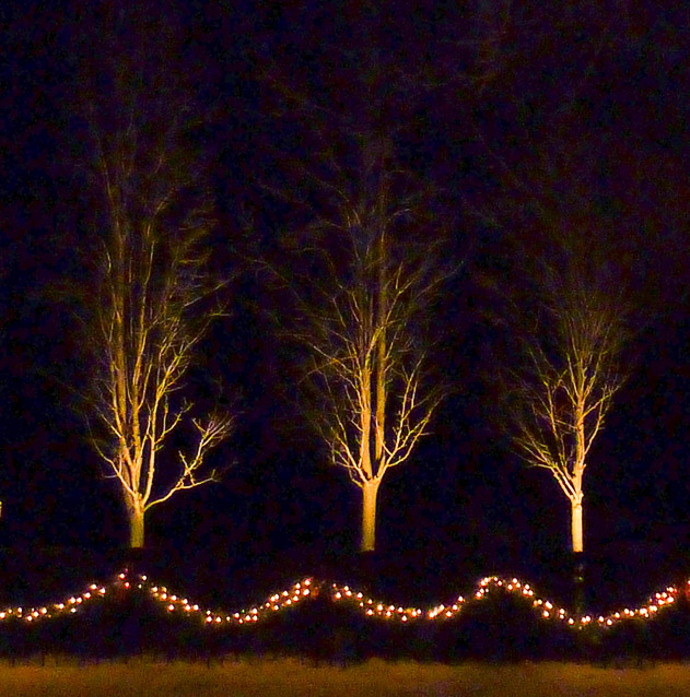 Christmas Lights - Susan Allen