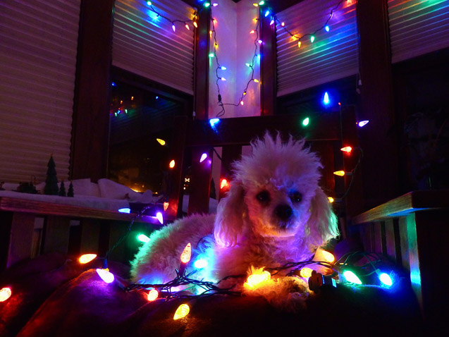 Christmas Puppy - Kathy Smith