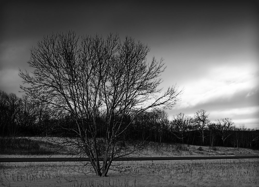 I-43 Tree
