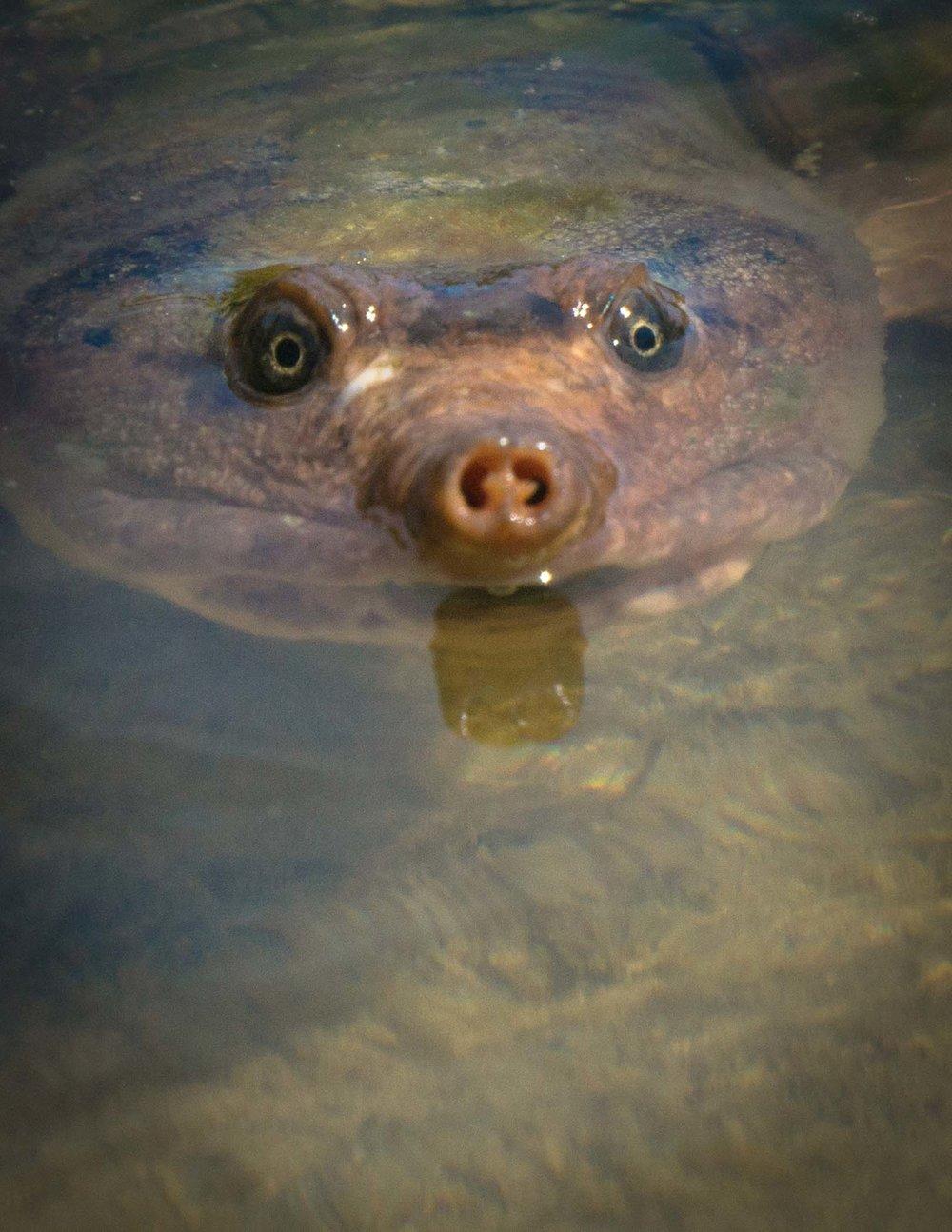 Turtle - Ted Tousman