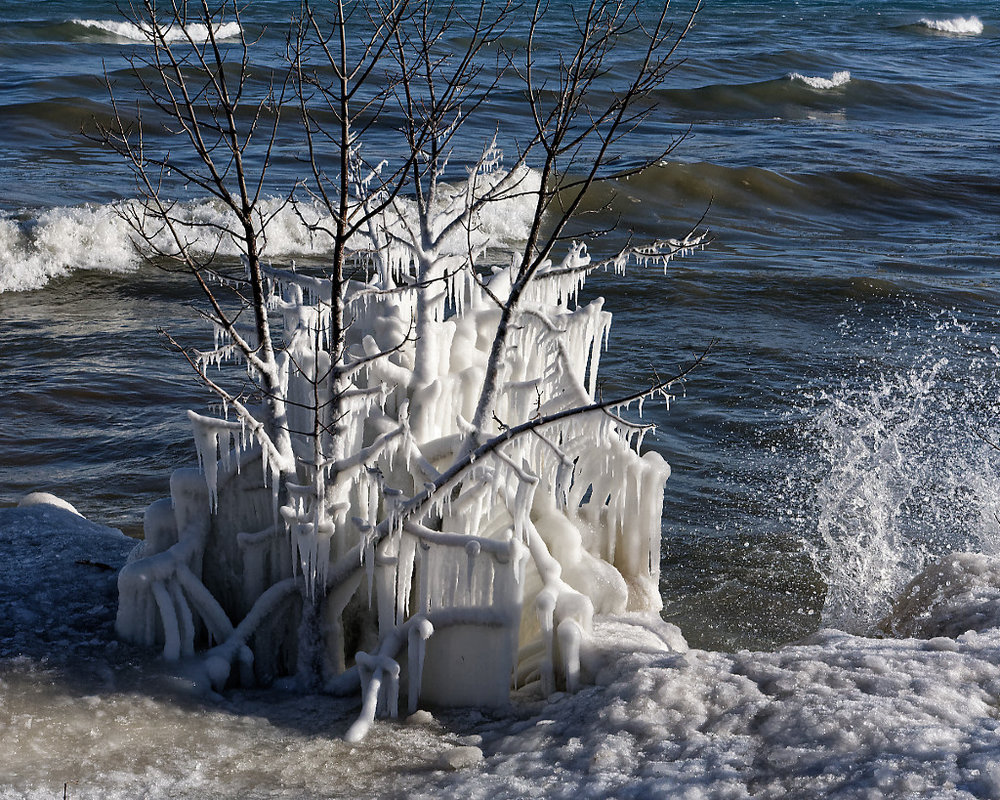 Iced Tree with a Splash of... - Peter Chow