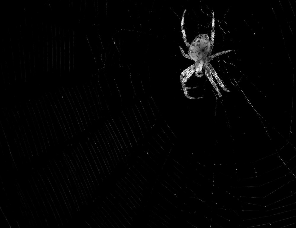 Spider in the Dark - Ted Tousman