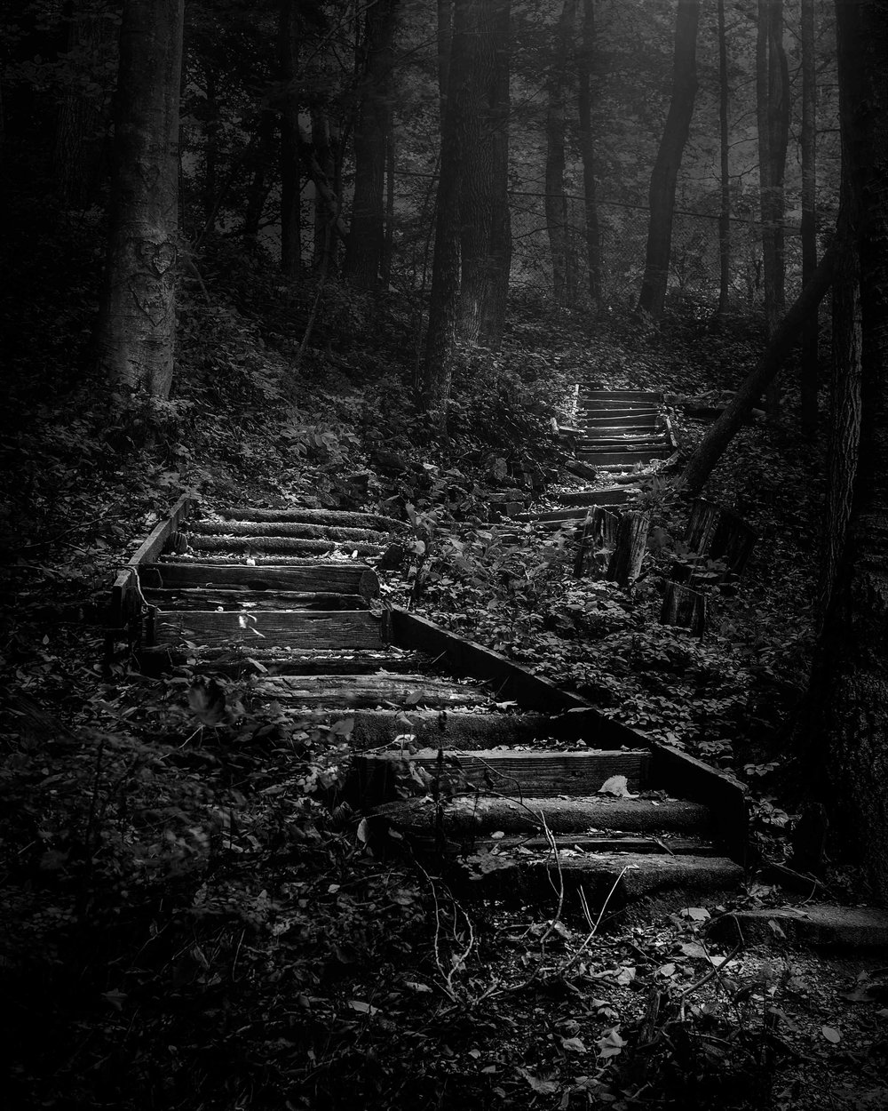 Open 1st place - Forest Stairs - Scott Norris