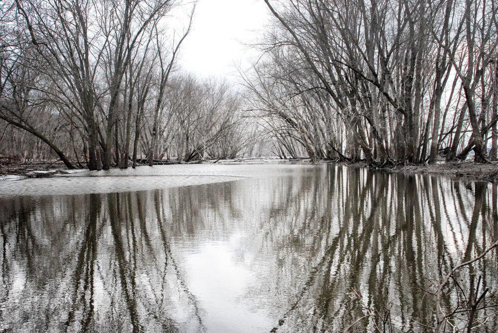 Flooded River - Phyllis Bankier