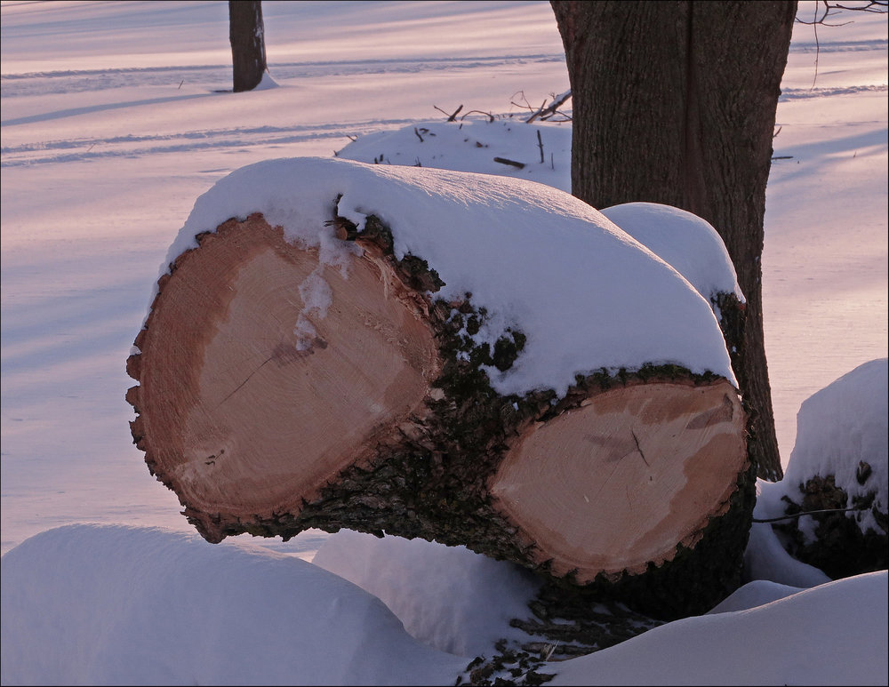 Cut Tree - Steve Jarvis