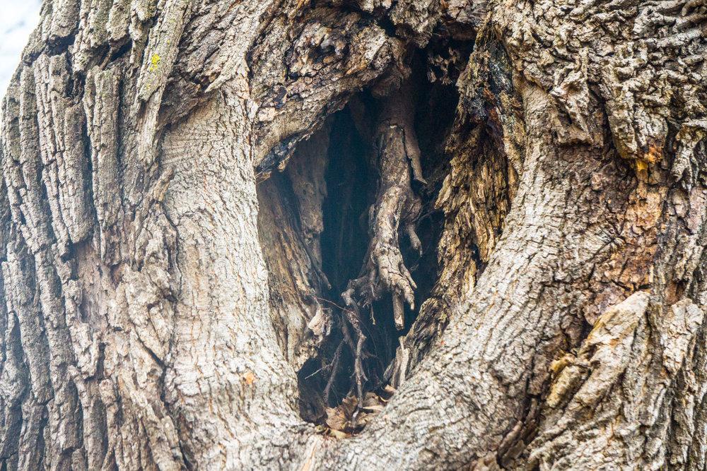 Tree Parts - Ted Tousman