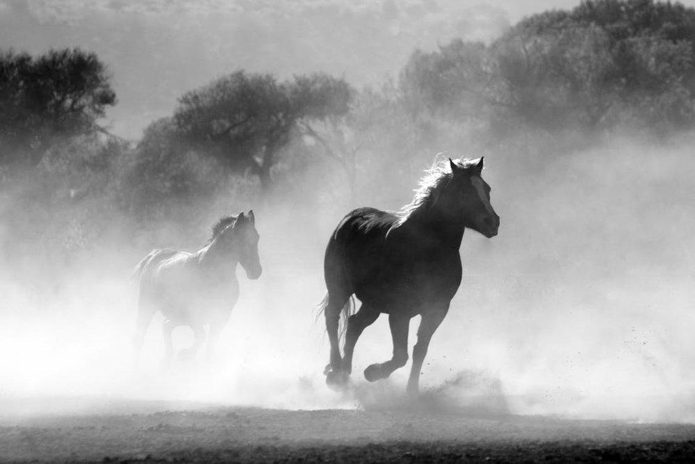 organizational horse holding