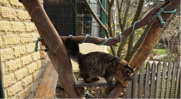 Happy contained cat, O'Malley in his enclosure. Photo by Lara van Raay