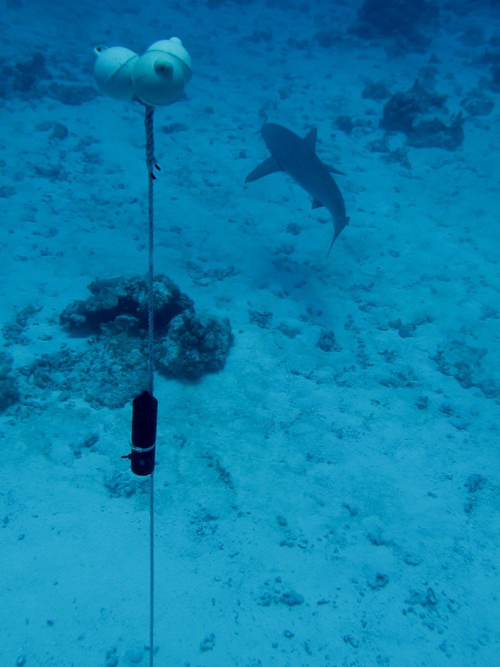 Installing and maintaining underwater acoustic array for the UH Shark Lab.