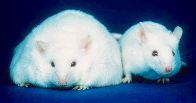 2 Mäuse.jpg