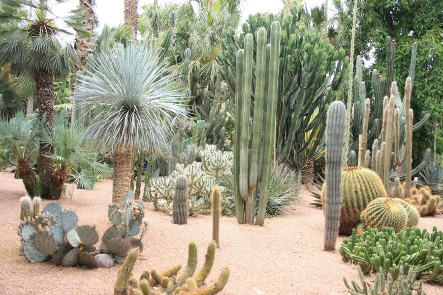 U0027Collections Of Cacti, Exotic Plants And Trees Are Landscaped To Emphasize  Each Oneu0027s Unique Beauty. The Pools, Streams And Fountains Create A Haven  Of ...