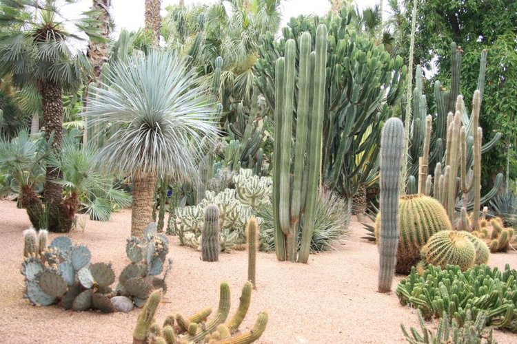 Majorelle Cactus Gardens, Morocco — Landscape Architects