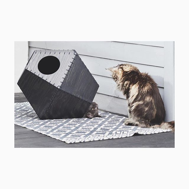 🙏@miamortensenphotography #eltonandfuji #mainecoon #studiotigerstripes #catfurniture