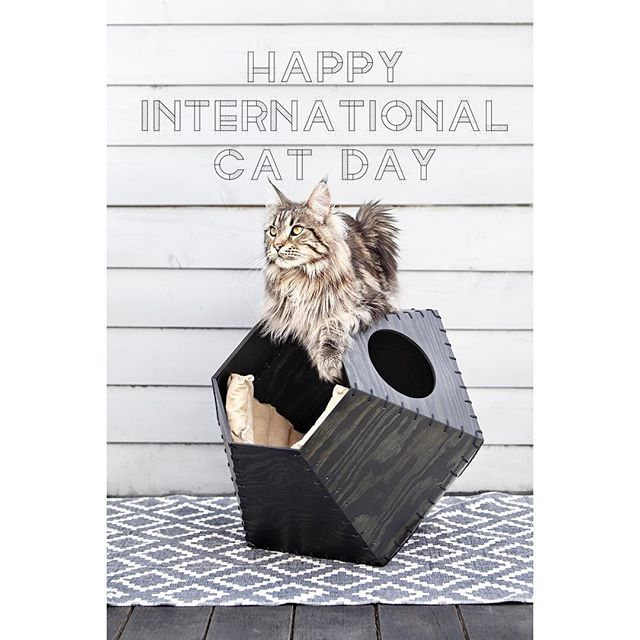 Happy Cat Day greetings to all felines and friends/owners/admirers/servants from Studio Tigerstripes 😸🐯😻 #internationalcatday #mainecoon #catfurniture #catcave #fujiandelton #studiotigerstripes