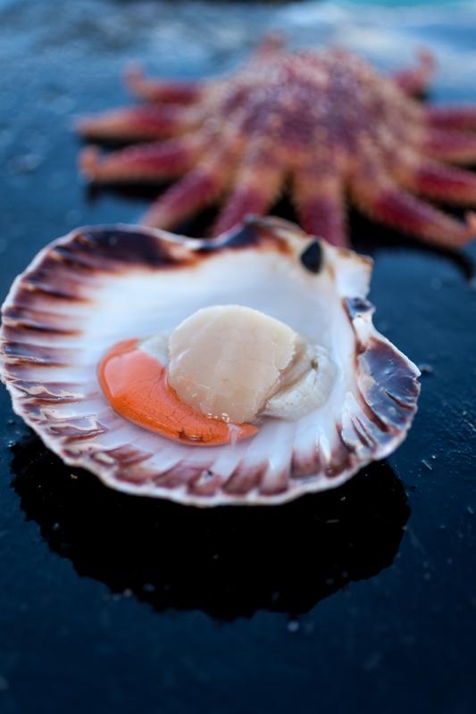 Ethical Shellfish Co-2.jpg