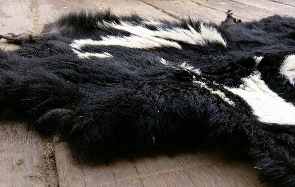 Pictured: A beautiful lambskin rug now ready for a lifetime of enjoyment and appreciation.