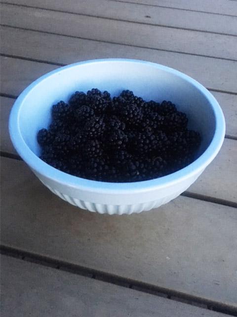 Brombær4.jpg