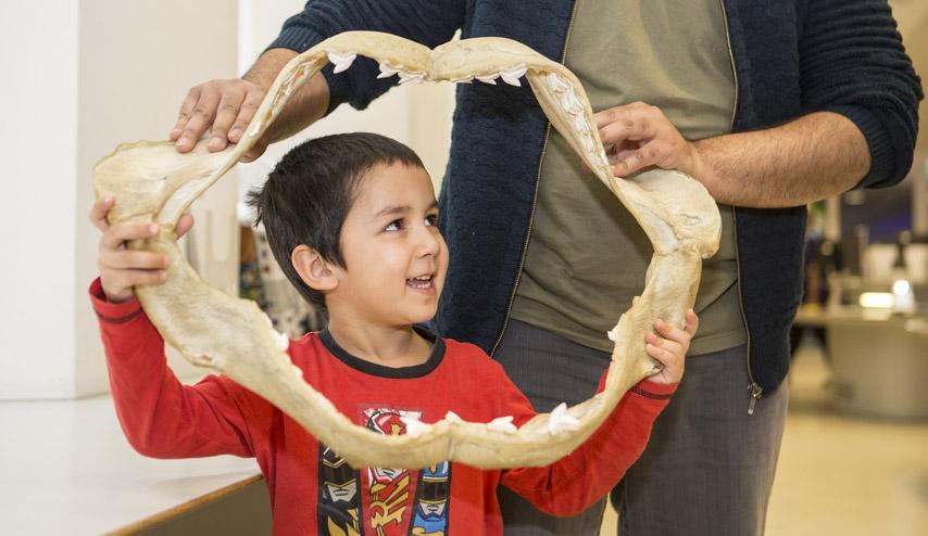 dawnosaurs-natural history museum.jpg