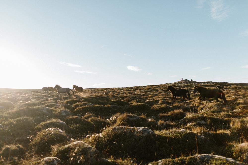 Iceland_Walk-355.jpg