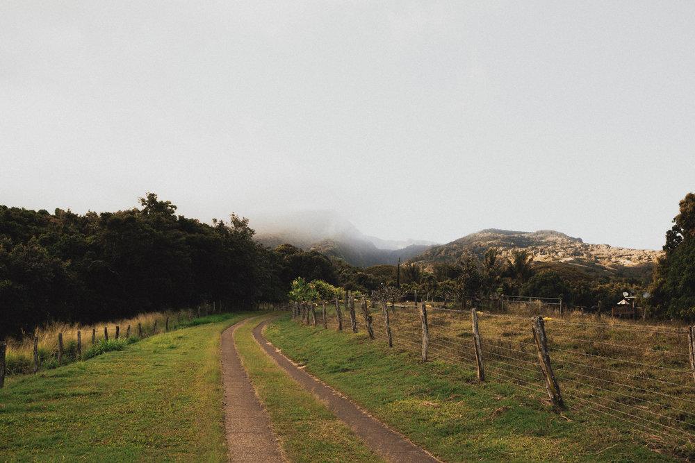 Maui_WV-21.jpg