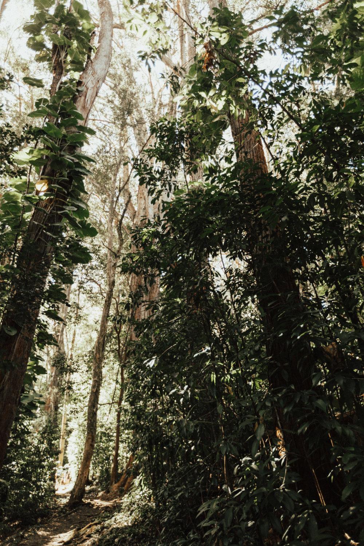 MauiBlog-45.jpg