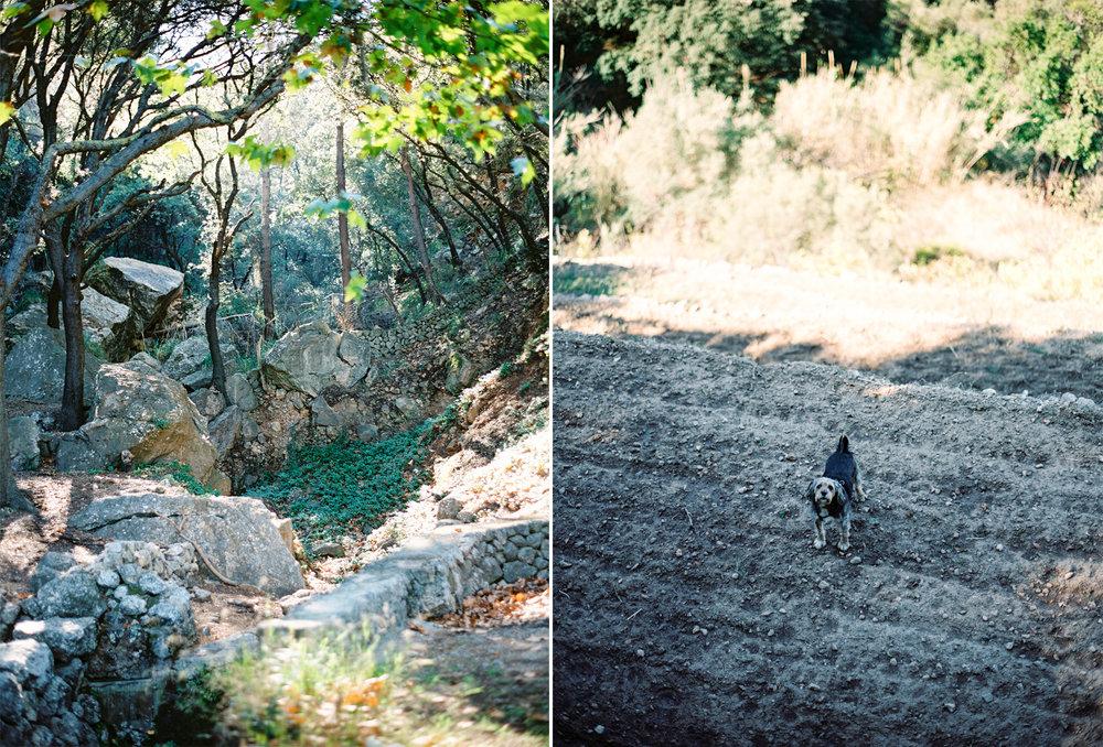 Mallorca_col1.jpg
