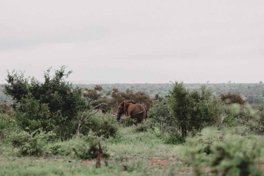 Safari_Julia_Andrew_blog_res-55.jpg