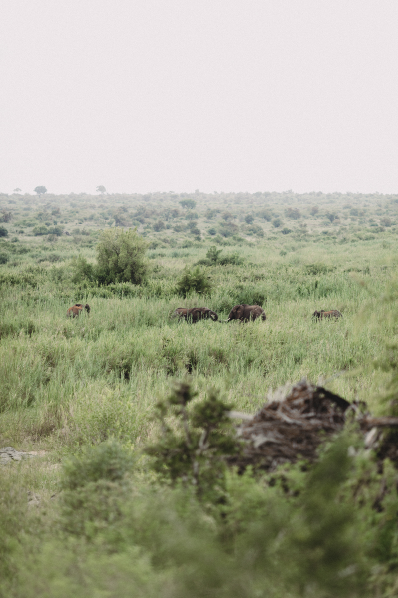 Safari_Julia_Andrew_blog_res-56.jpg