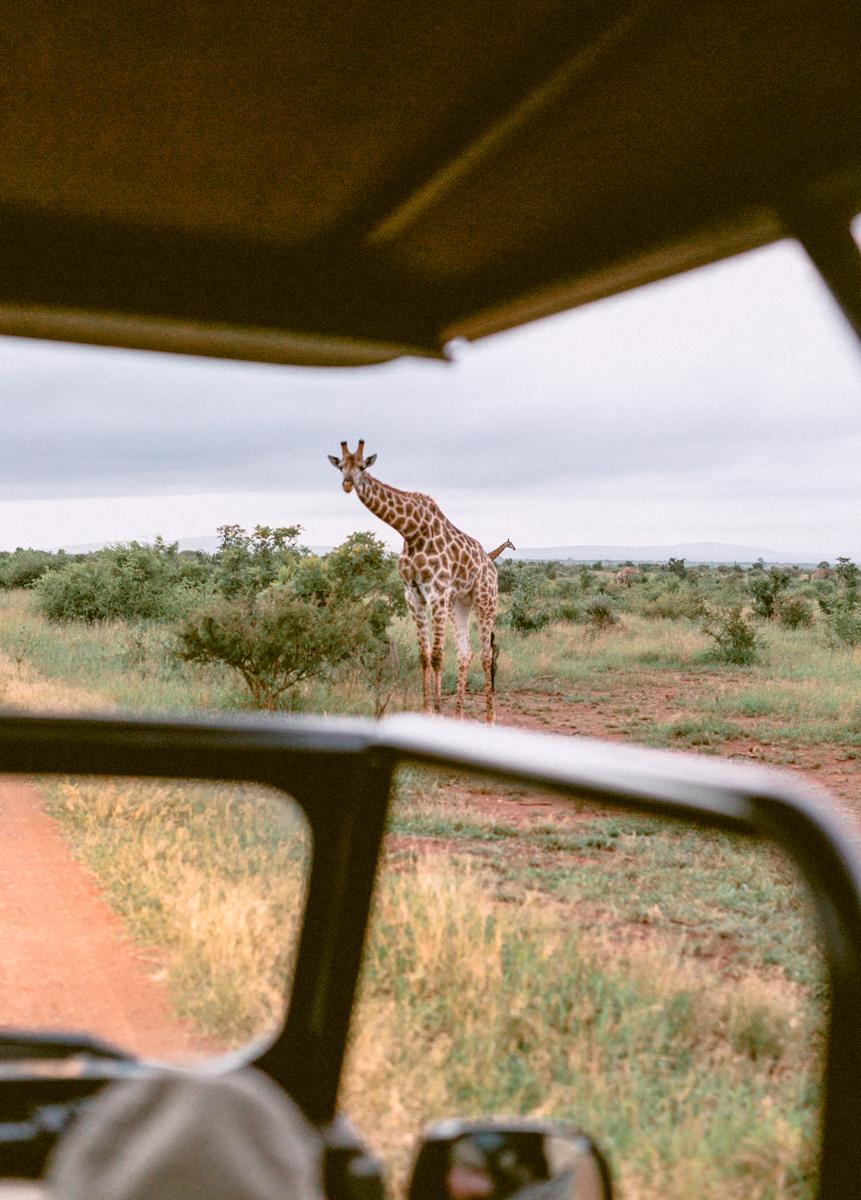 Safari_Julia_Andrew_blog_res-45.jpg