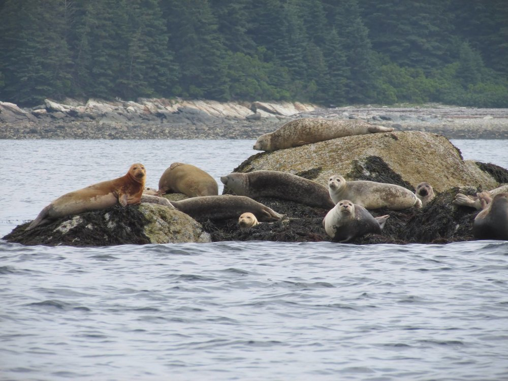 more seals.jpg