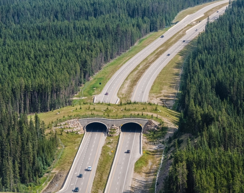 Wildlife crossing, Banff National Park, Photo: A. Banting © Parks Canada