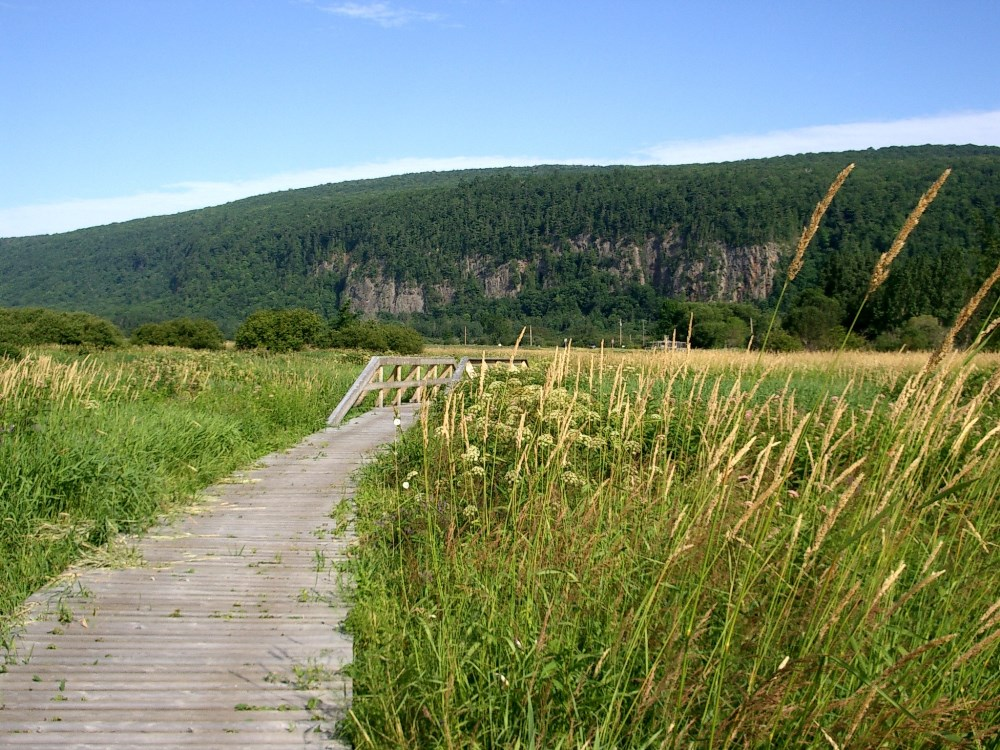 Cap Tourmente National Wildlife Area, photo: Andrée Mailloux © Environment and Climate Change Canada