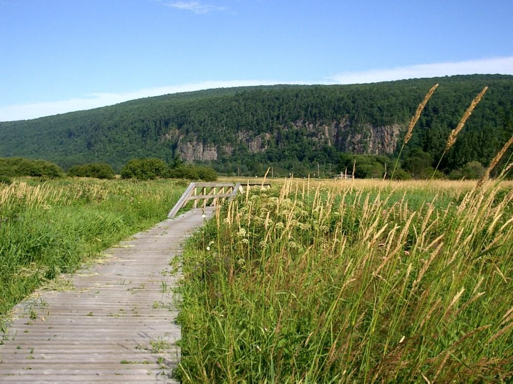 Réserve nationale de faune du Cap-Tourmente, photo : Andrée Mailloux © Environnement et Changement climatique Canada