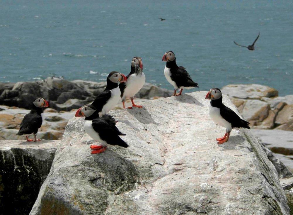 Refuge d'oiseaux migrateurs de l'île Machias Seal, photo : C. Buhariwalla © Environnement et Changement climatique Canada