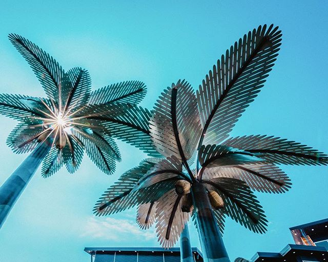 our 2nd stop on the texas leg of tour is under these palm trees! first 4 to guess this venue in college station will win a free ticket to this show on 5/4. official announcement coming soon! more shows to come!