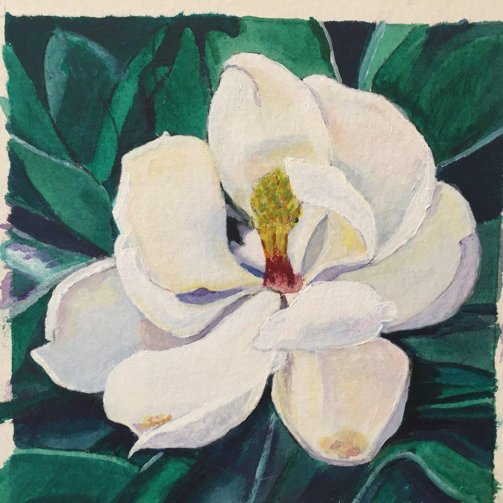 M. grandiflora study #1  2016