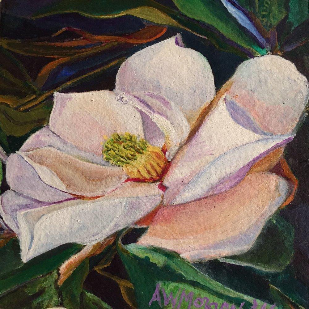 M. grandiflora study#3  2016