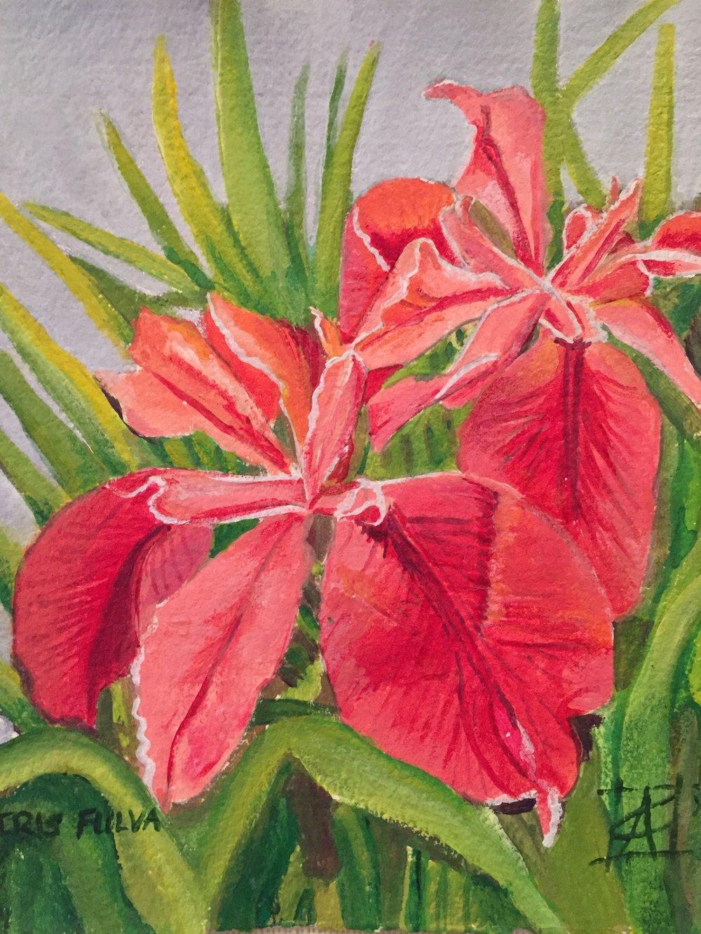 "Iris fulva2016acrylic on paper 10x10"" $500"