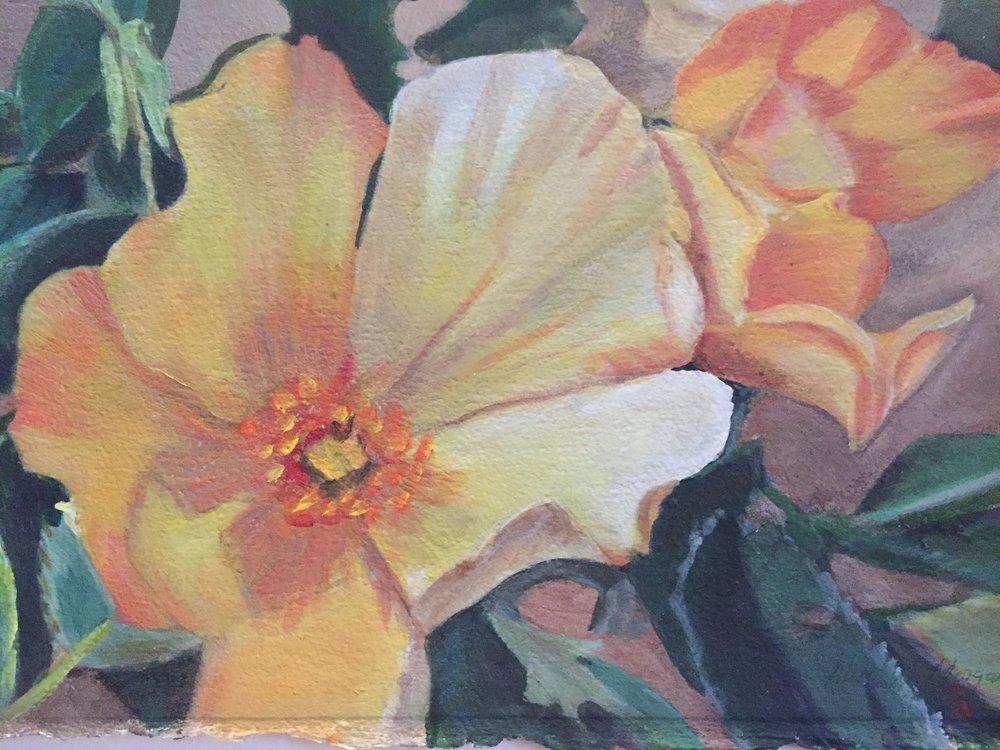 "Rosa polyantha ""Sheila Baird"" 2006"