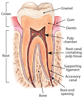 Root Canal Treatment at tooth dental surgery in Waterloo, London